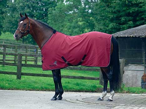 Masta Avante Cotton Summer Sheet The Tack Shack Horse